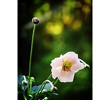 Graceful bow Photographic Print