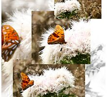 White flowering weed with Gulf Fritillary by KSKphotography