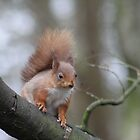 Wee Reds by Gerry  Temple