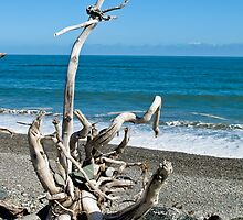 driftwood beach 2 by Anne Scantlebury