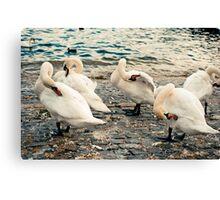 Lake Zurich Swans Canvas Print