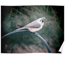 Tufted Titmouse Poster
