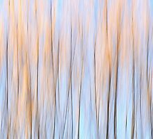 Autumn colours of a willow by Henri Koskinen