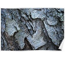 Bark Formations Poster