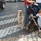 A Very Patient Dog by joycee