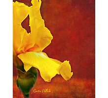 Flamenco Iris Photographic Print