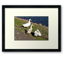 Would you like some cheese with those quackers? Framed Print