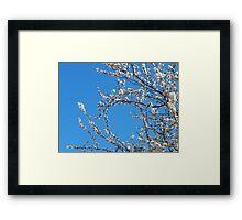 Blossom Circle Framed Print
