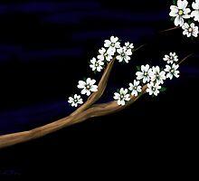 Dogwood on a limb by KathiSPerez