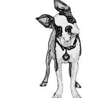Curious Boston Terrier in Pencil by jennikarl