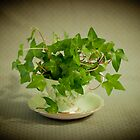 Tea Cup Ivy by Sandra Foster