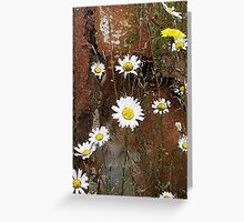 Daisies with rusty vehicle Greeting Card