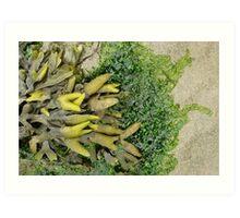 Rockweed & sea lettuce on the beach Art Print