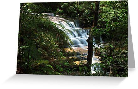 Rainforest Waterfall by Michael John