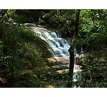 Rainforest Waterfall Photographic Print