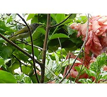 Garden Bird Photographic Print