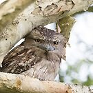Sweet Mother Frogmouth by byronbackyard