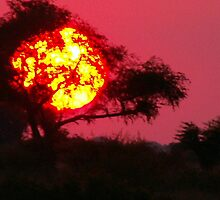 Sun Tree! by Mark Braham