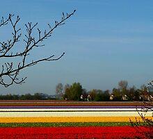 flower carpet by supergold