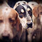Hound Dogs 2 by MarceloPaz