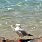 A lone Seagull  by Tammy Howe