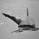 Jaws by Tammy Howe