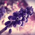 Hyacinth for the Soul by Lea  Weikert