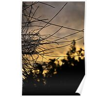 Pine Needle Sunset Poster
