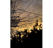 Pine Needle Sunset Photographic Print