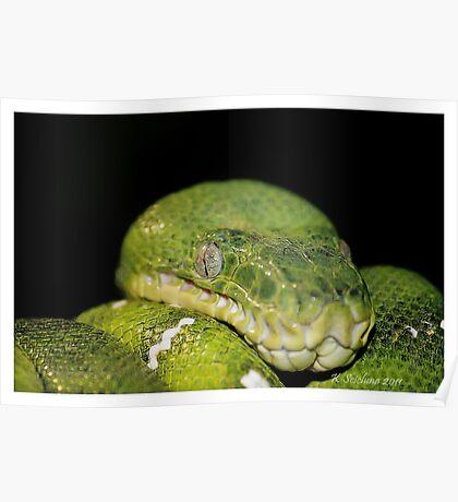 Green boa Poster