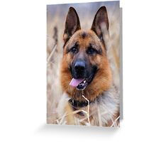 German Shepherd in the grass Greeting Card