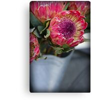 Protea - Proudly South Africa Canvas Print