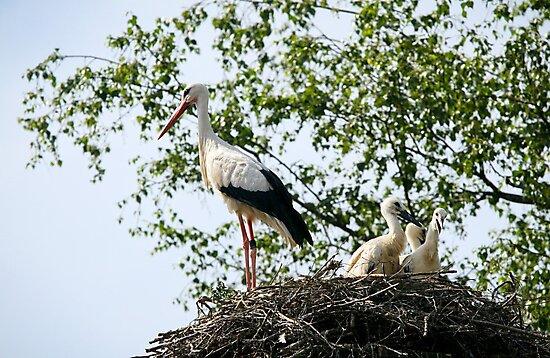 Stork family on the nest  by torishaa