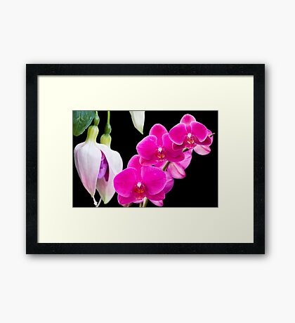 Fuchsias and Orchids  Framed Print