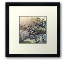 Tidal River Tea Tree Framed Print