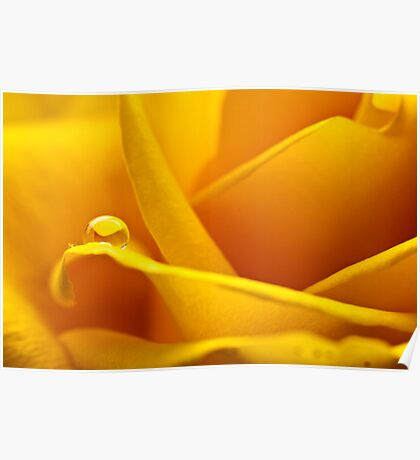 Yellow curves Poster