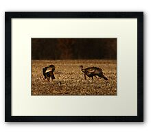 Turkeys in Golden Field Framed Print