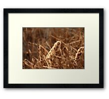 Cat Tails Framed Print