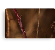 Abstract Thorns Canvas Print