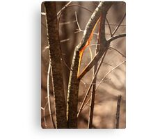 Saw Tree was 'Broke' this way Metal Print