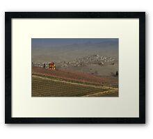 vineyard in Italy Framed Print