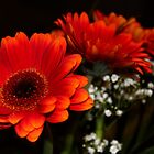 Gerberas in a Bunch by karina5