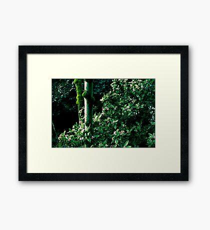 gardeic Framed Print