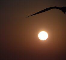 Sun's Corner Bird - Ave De Esquina Del Sol by Bernhard Matejka