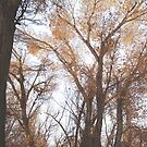 Sunlit Forest by IreKire