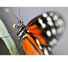Having lunch butterfly style Photographic Print