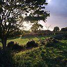Irish Glen 1, Rustic Irish Fields, 2007 by ArleneMartine