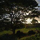 Irish Glen 2, Rustic Irish Fields, 2007 by ArleneMartine