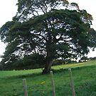 The old Tree, Rustic Irish Fields, 2007 by ArleneMartine