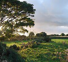 Irish Glen 3, Rustic Irish Fields 2007 by ArleneMartine